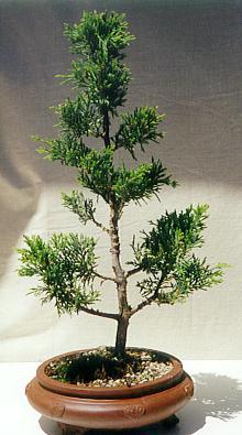 Bonsai Palace Beautiful Potted Bonsai Groups 4 Amp 5
