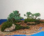 Juniper Display