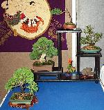 A Superb Bonsai Display